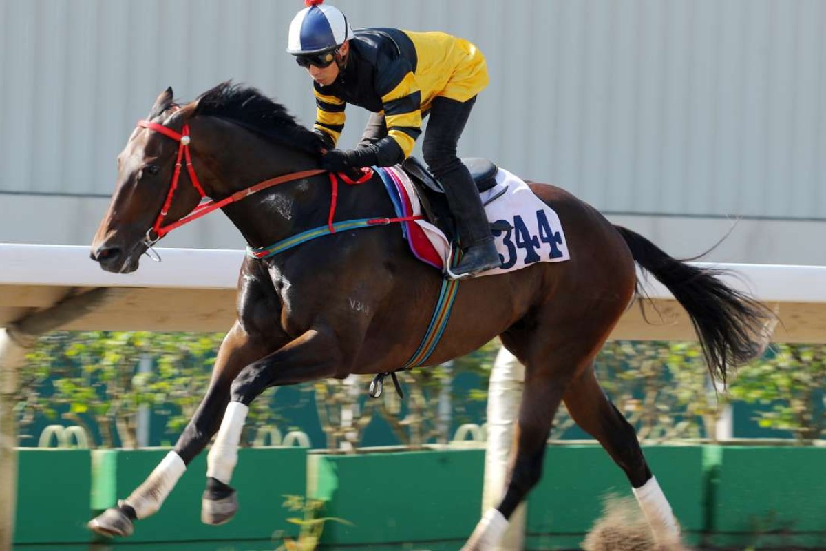 D B Pin strides out in a recent barrier trial. Photos: Kenneth Chan