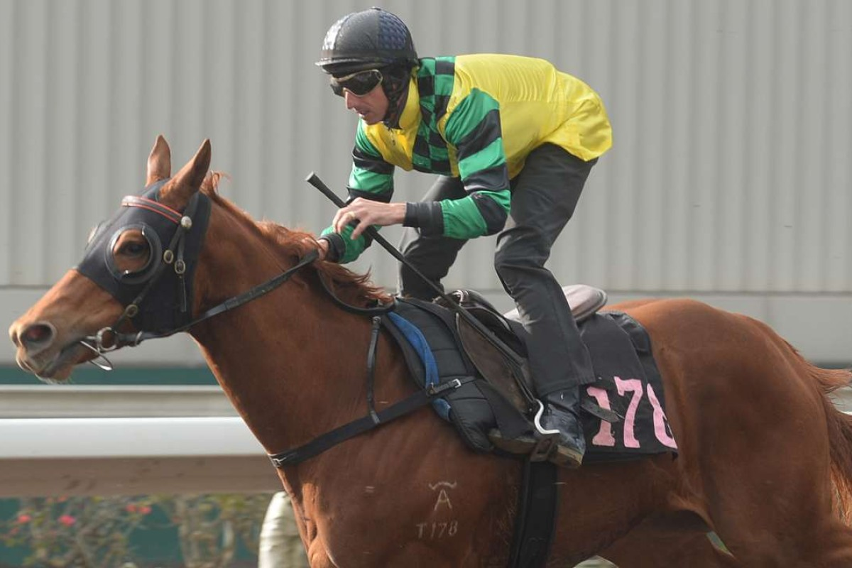Nash Rawiller rides Fine With Me in a barrier trial at Sha Tin in February. Photos: Kenneth Chan.