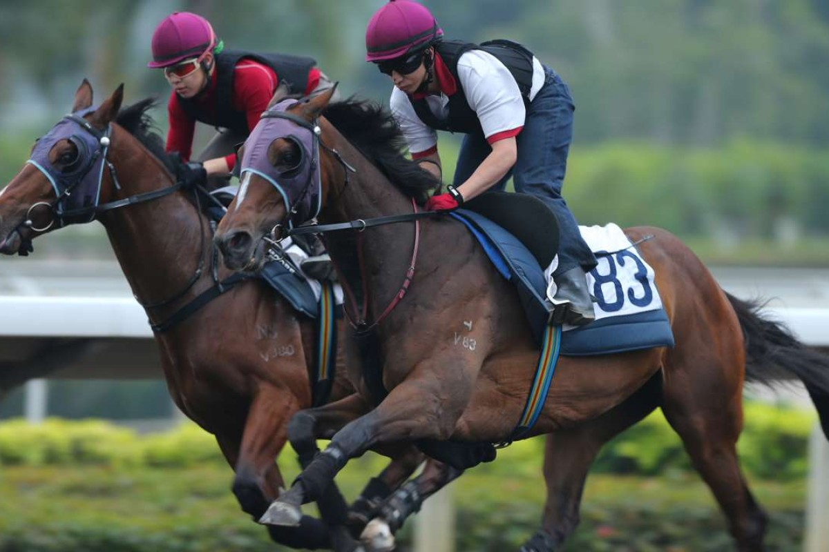 Werther (right), galloping on the all-weather track at Sha Tin, will not be helped by the soft conditions. Photos: Kenneth Chan