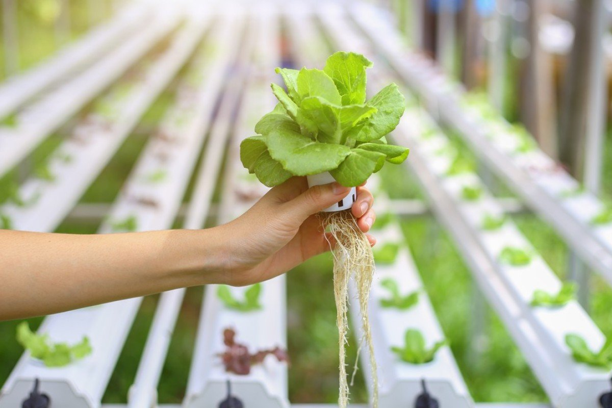 Anese Experts Make A Breakthrough In Farming Technology Using Polymer To Grow Food