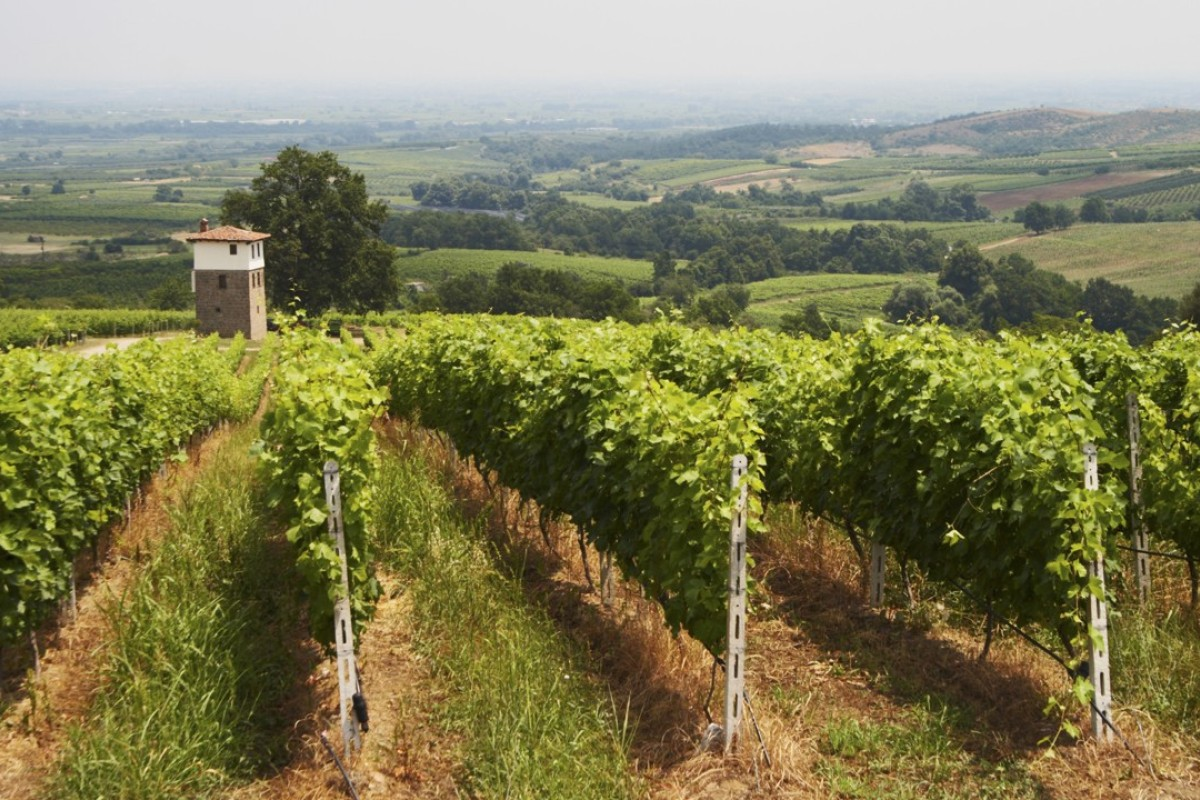 The Kir-Yianni winery in Naoussa, Greece. Pictures: Alamy