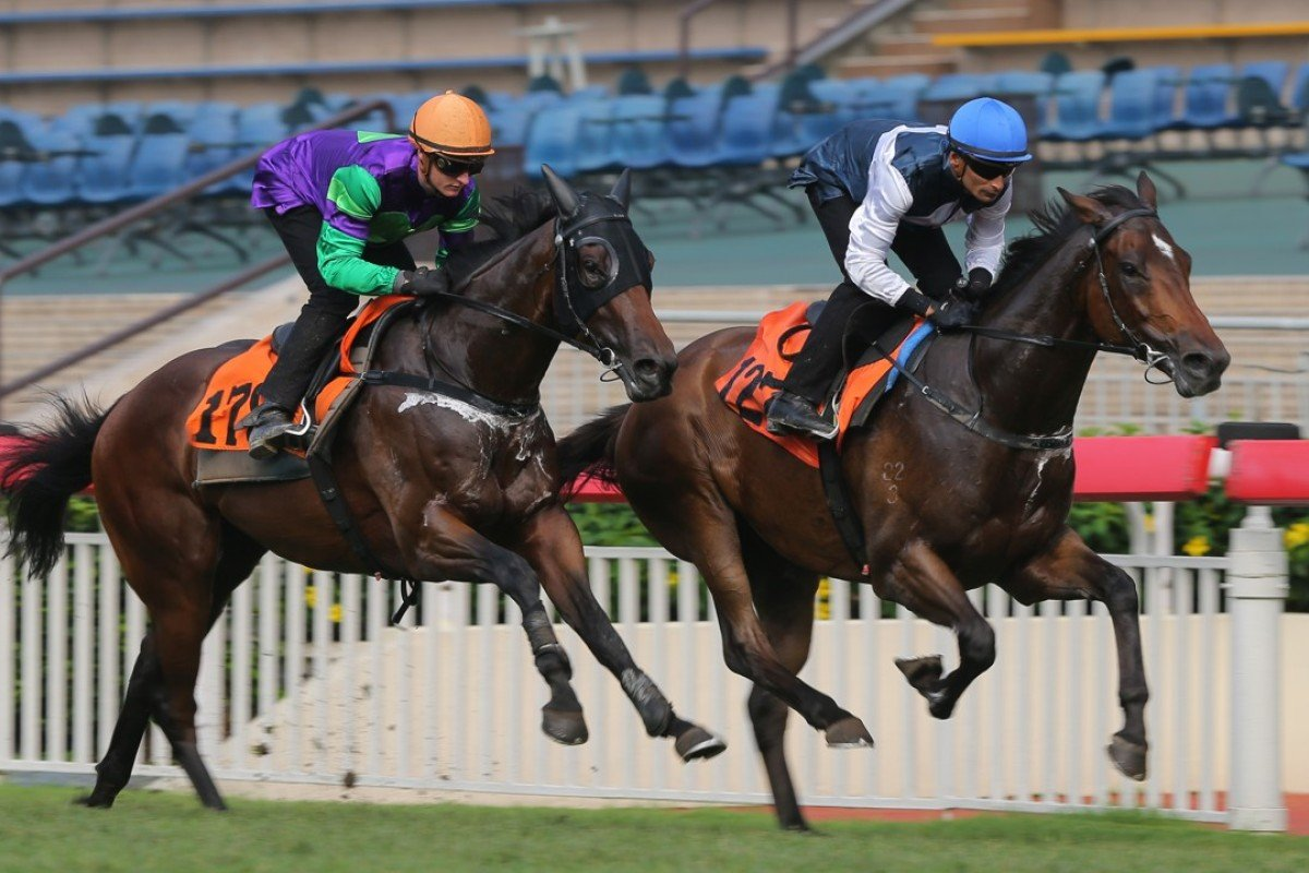 Karis Teetan guides Sacred Ibis (right) to a barrier trial win at Sha Tin in May. Photo: Kenneth Chan