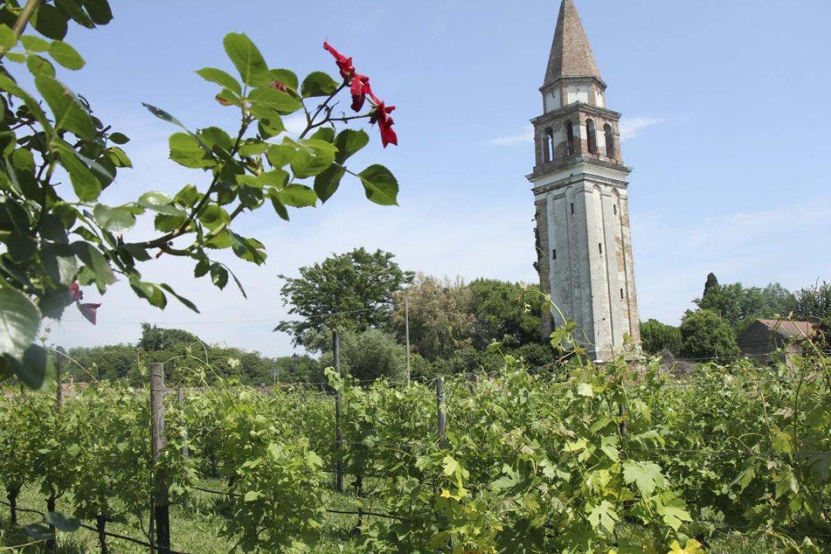 The Venissa vineyard, planted with the almost extinct lagoon grape dorona. Pictures: Venissa Wine Resort