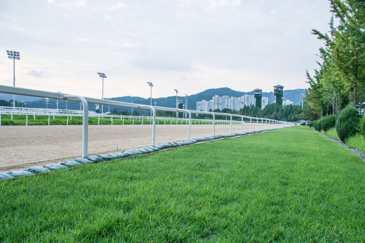 A strip of experimental turf at Seoul racecourse. Photo: Korean Racing Authority