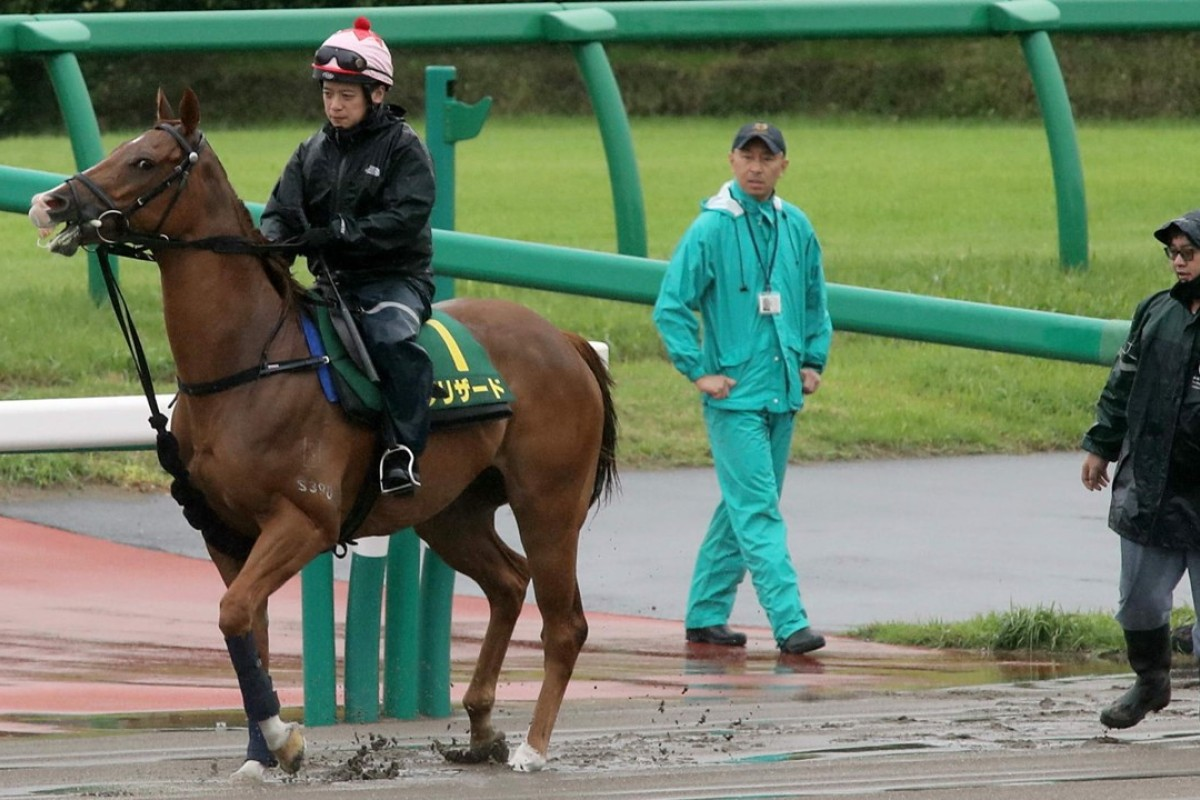 Stanley Wong Ho-yin takes Blizzard out for a light jog at a wet Nakayama in preparation for Sunday's Sprinters Stakes. Photo: Kenneth Chan