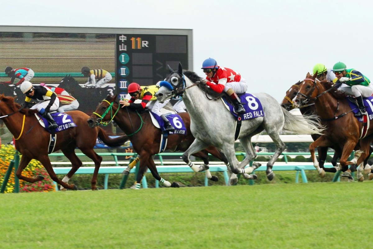 Red Falx (8), ridden by Mirco Demuro, wins the Sprinters Stakes at Nakayama on Sunday. Gerald Mosse and Blizzard (12) came fifth. Photos: Kenneth Chan