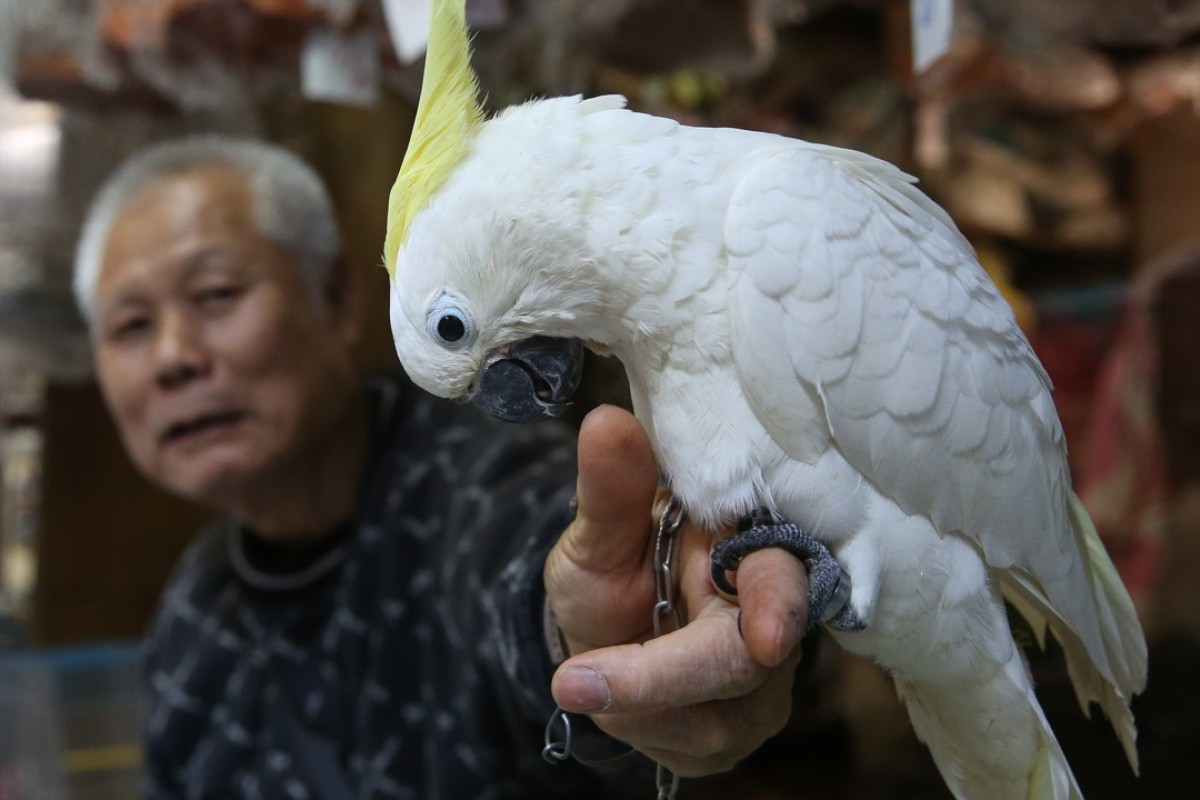 Shop owner Mr Chan poses for a photograph with a yellow-crested Cockatoo at Yuen Po Street Bird Garden, in Hong Kong. Picture: SCMP