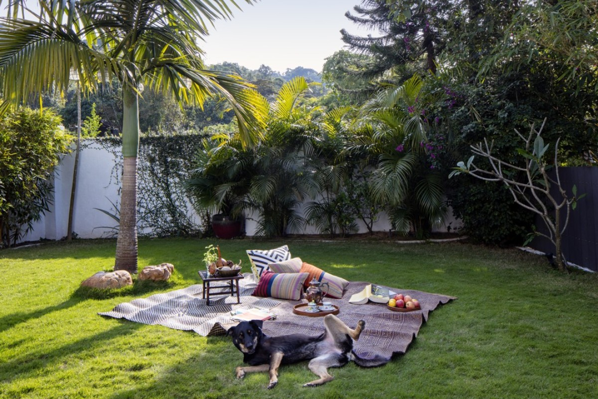Perfect for a picnic, the garden is a haven for dog Latxa. Photography and video: John Butlin. Styling: David Roden. Photo assistant: Timothy Tsang.