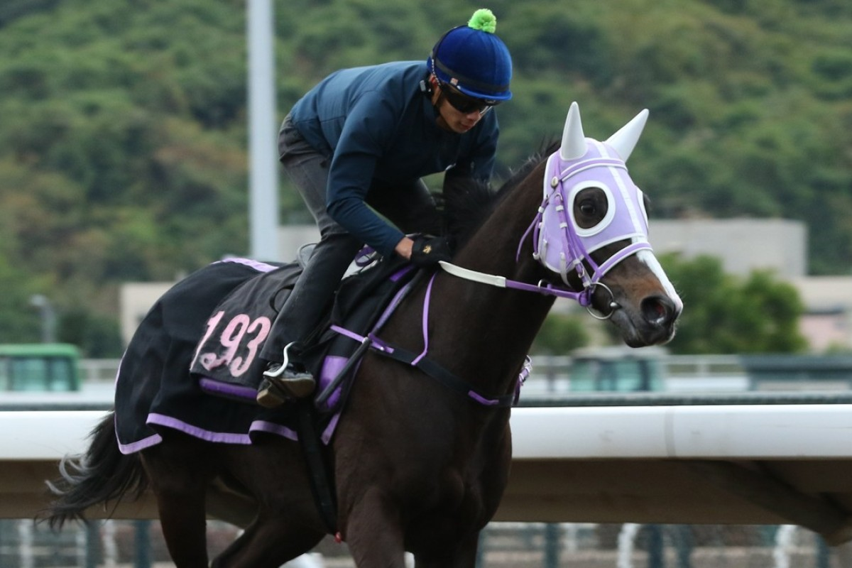 Derek Leung rides Classic Emperor left-handed at trackwork in January. Photos: Kenneth Chan