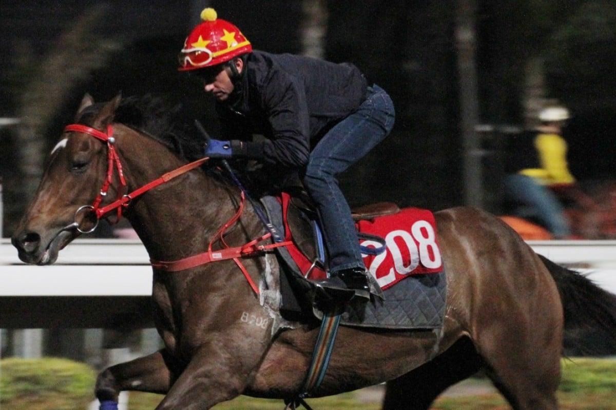 Douglas Whyte gallops Good Omen on February 19. Photo: Kenneth Chan