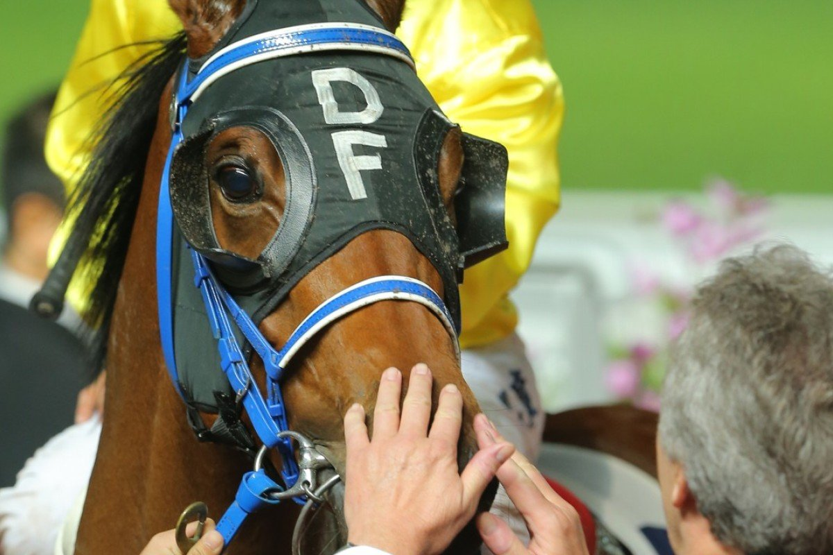David Ferraris gives Chater Thunder a pat after his win last start. Photos: Kenneth Chan.