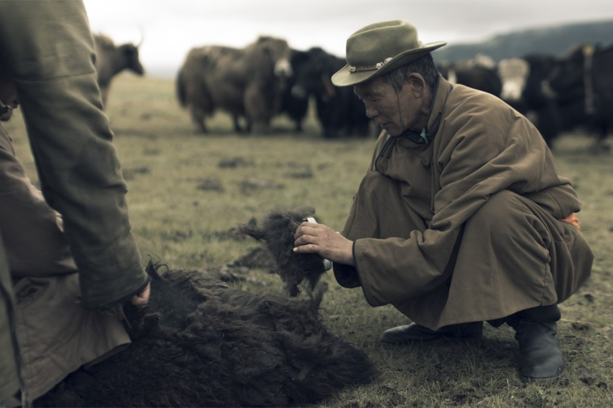 Tengri purchases yak fibres directly from co-operatives that now benefit more than 4,500 nomadic herder families.