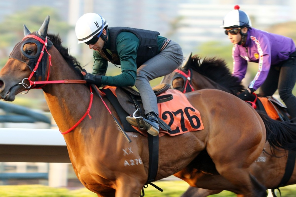 Jolly Gains works at Sha Tin on Monday. Photo: Kenneth Chan