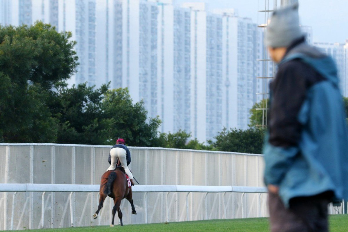 Michael Chang (right) watches Enjoyable Success at trackwork. Photo: Kenneth Chan