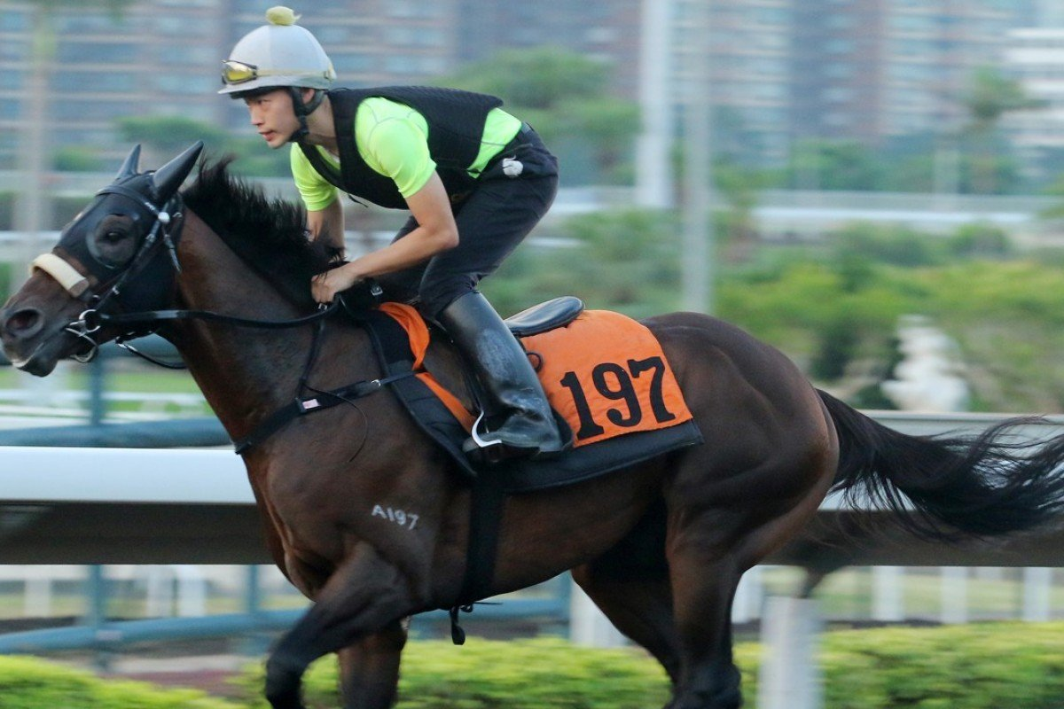 Open House gallops on the all-weather track. Photo: Kenneth Chan