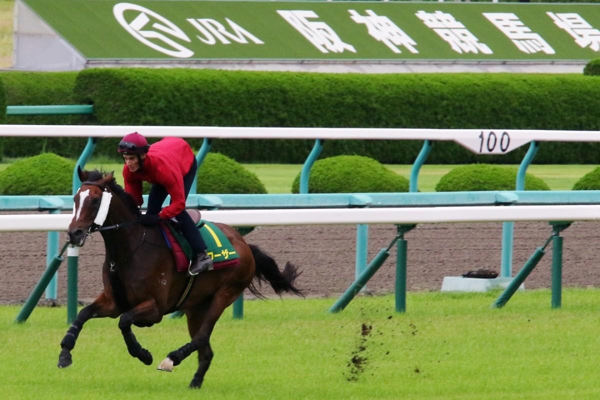 Werther gallops at Hanshin on Thursday morning in preparation for Sunday's Takarazuka Kinen. Photos: Kenneth Chan