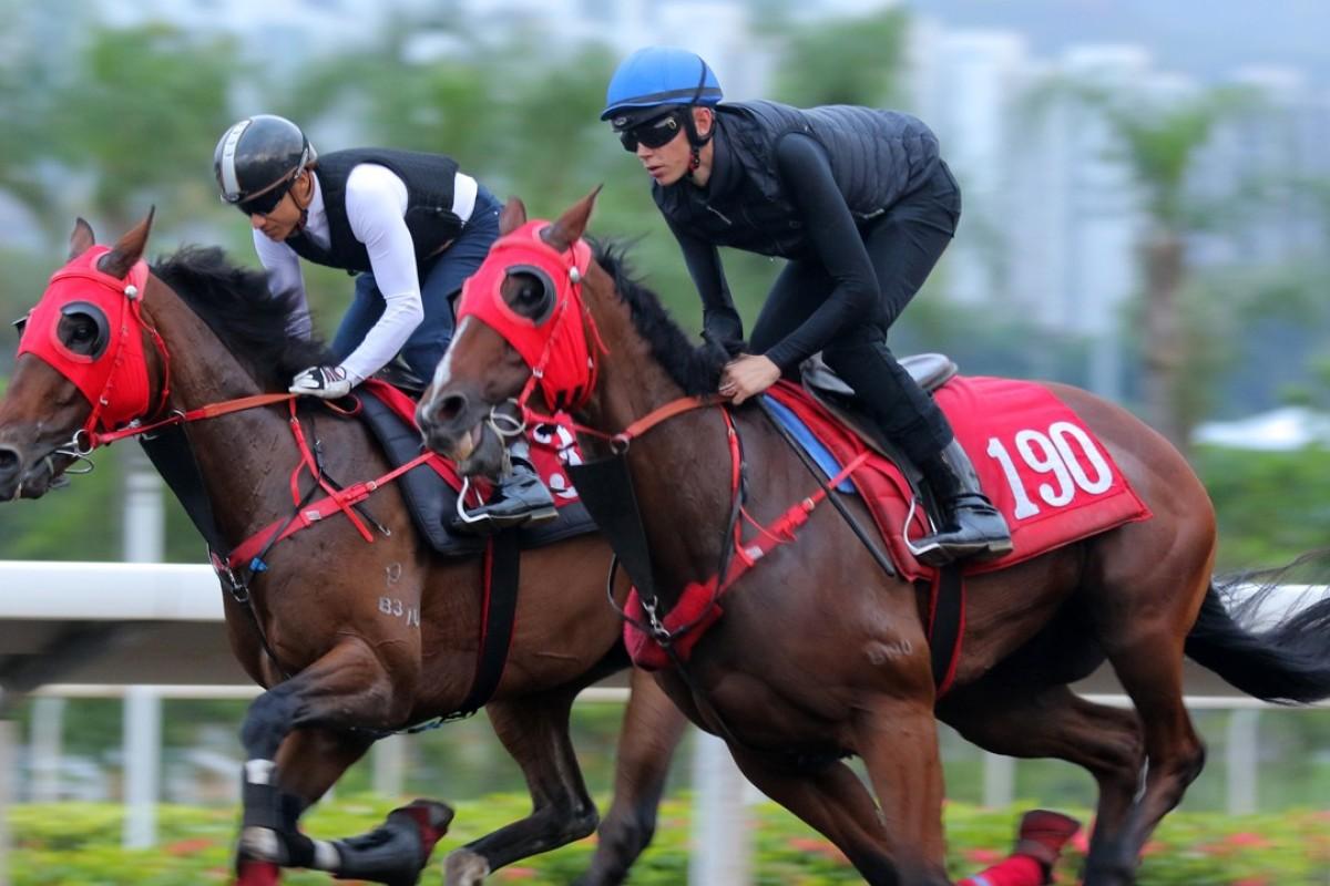 Golden Dash (right) gallops at Sha Tin with Callan Murray riding. Photos: Kenneth Chan
