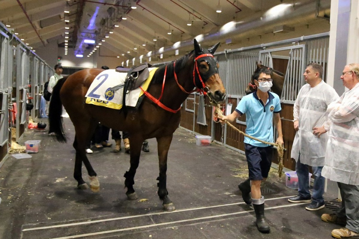 Horses at Conghua Racecourse are inspected by officials. Photo: HKJC