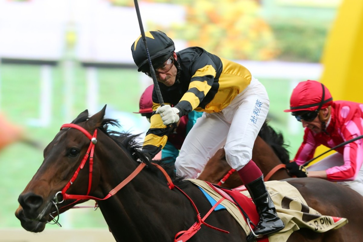 D B Pin, ridden by Olivier Doleuze wins the Group One Centenary Sprint Cup (1,200m) last season. Photos: Kenneth Chan