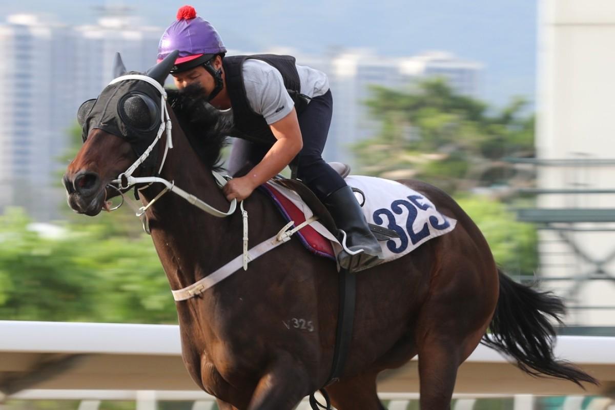 Pakistan Star gallops at Sha Tin on Thursday morning. Photos: Kenneth Chan