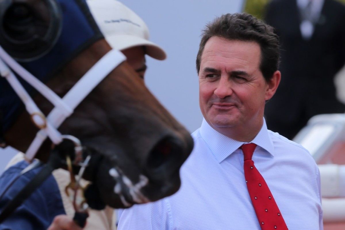 Trainer Michael Freedman looks over a horse. Photos: Kenneth Chan