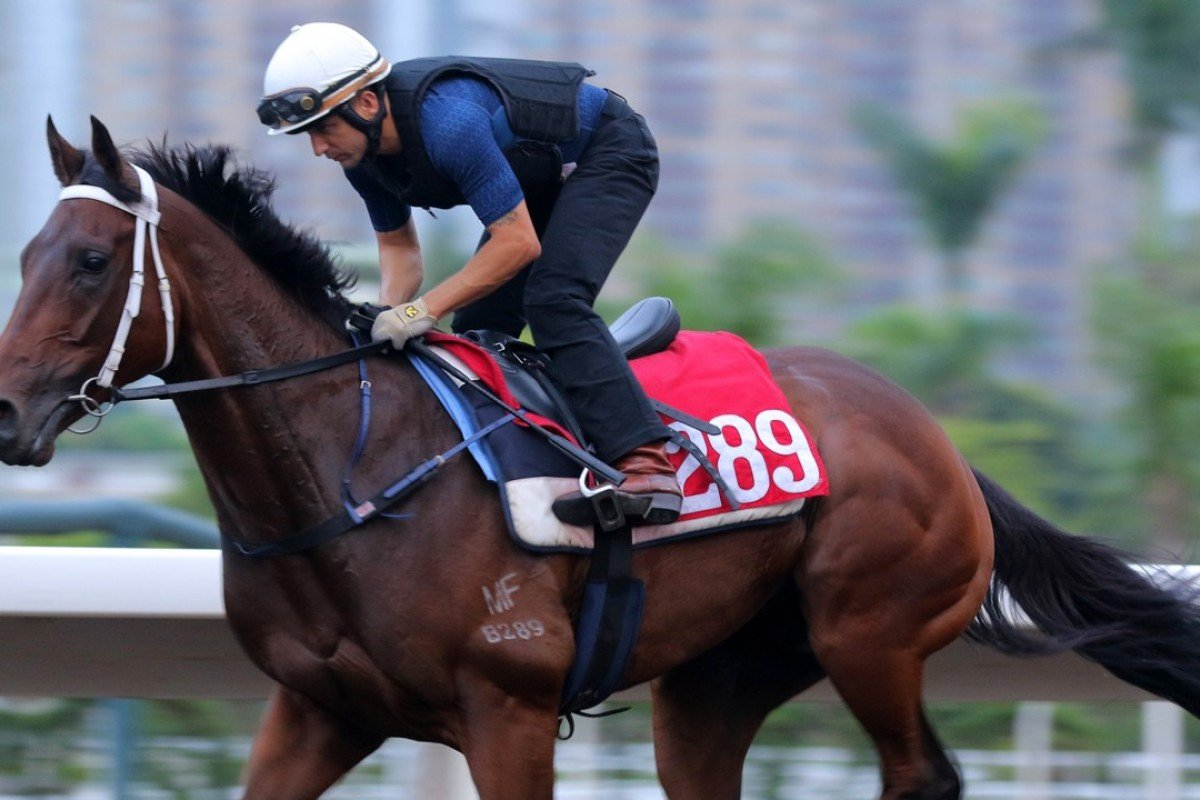 Bellagio gallops on the Sha Tin all-weather track. Photos: Kenneth Chan