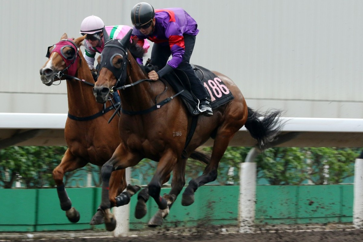 Fight Hero wins a barrier trial on his much preferred all-weather track late last month. Photos: Kenneth Chan