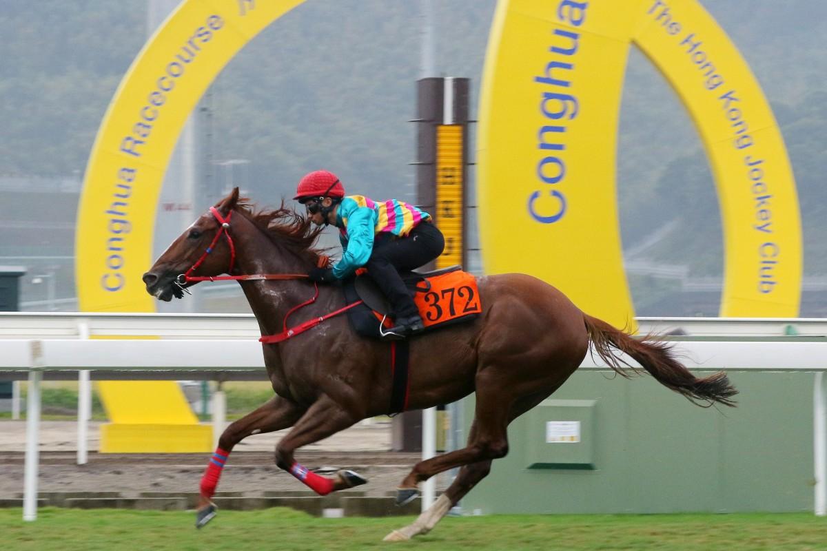 Dylan Mo trials Super Hoppy at Conghua Racecourse. Photo: Kenneth Chan