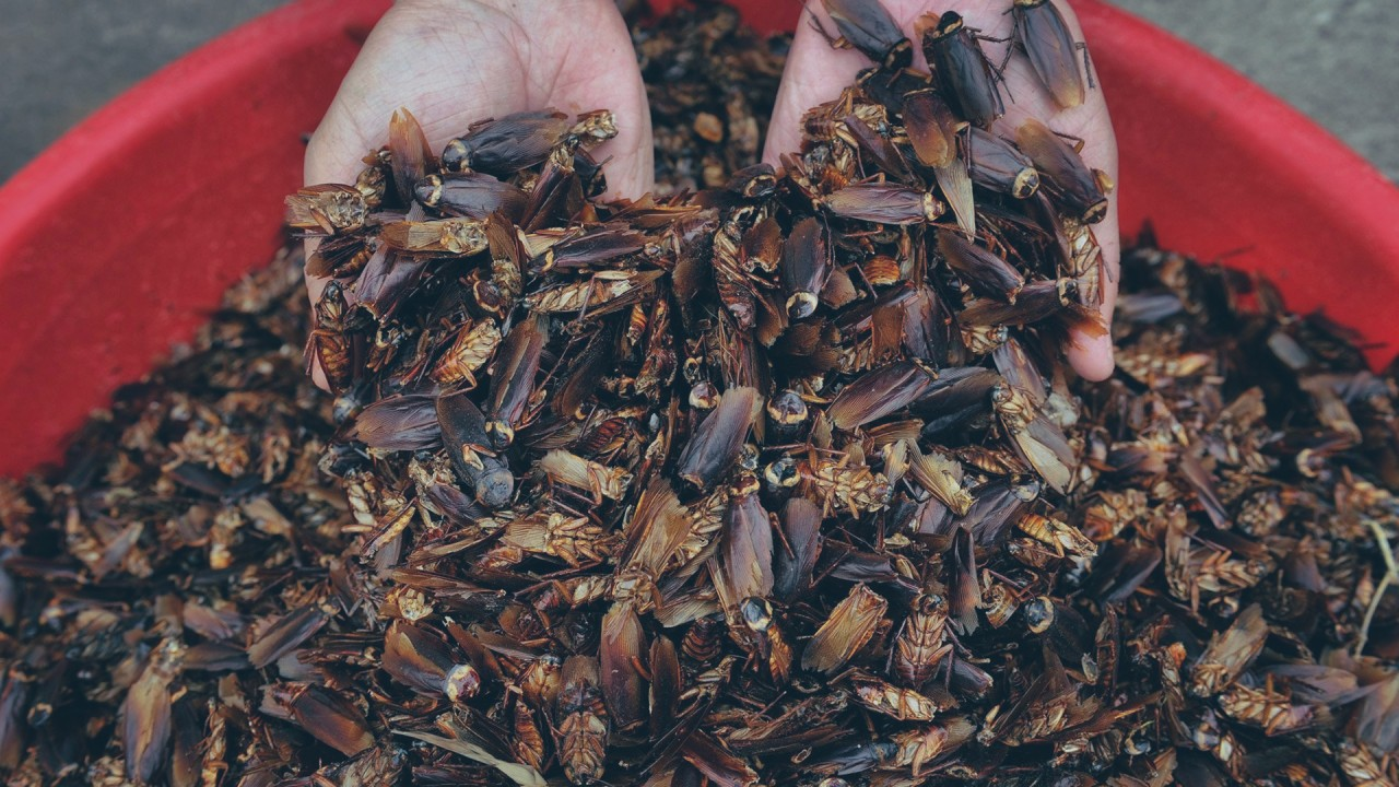 Inside China's five-star 'roach hotel'
