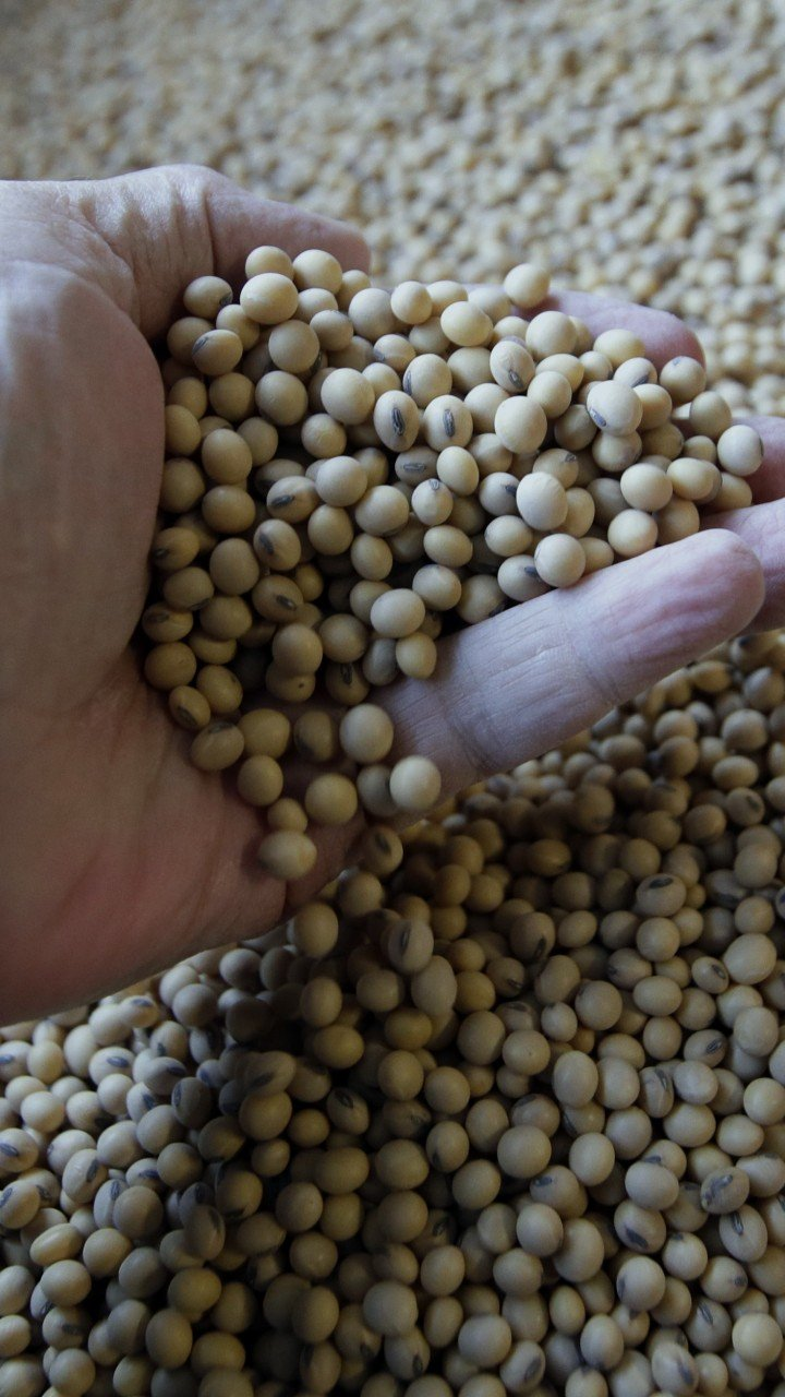 Ignore the US and grow more soybeans, China tells farmers