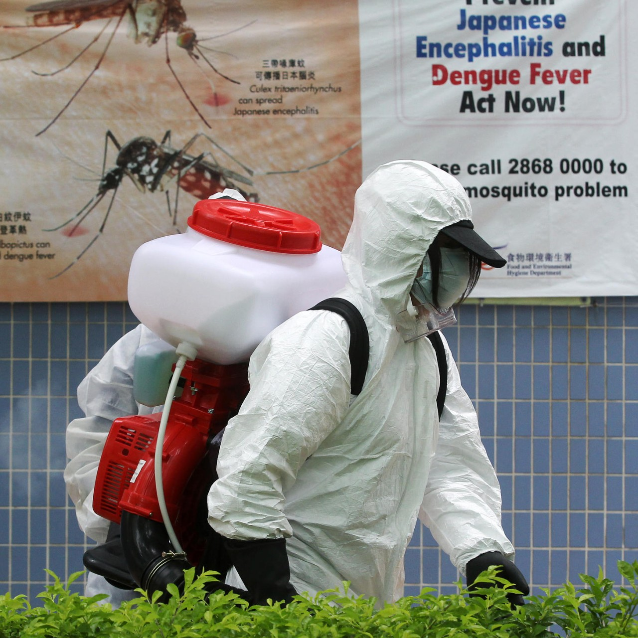 Dengue fever threat overshadows summer | South China Morning
