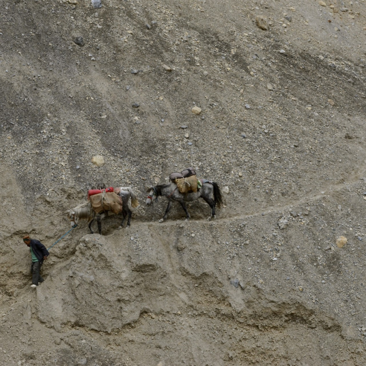 Pass masters: Ancient Himalayan Route of Wind and Wool