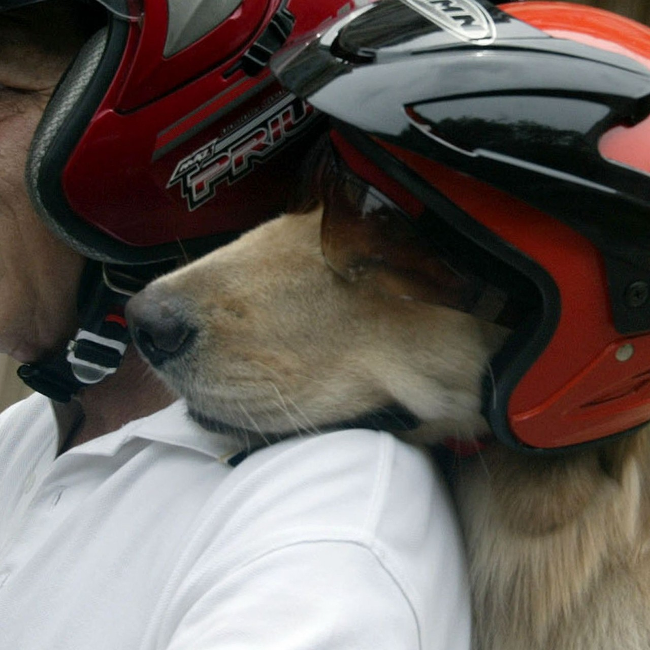 How Indonesia (finally) fell in love with man's best friend
