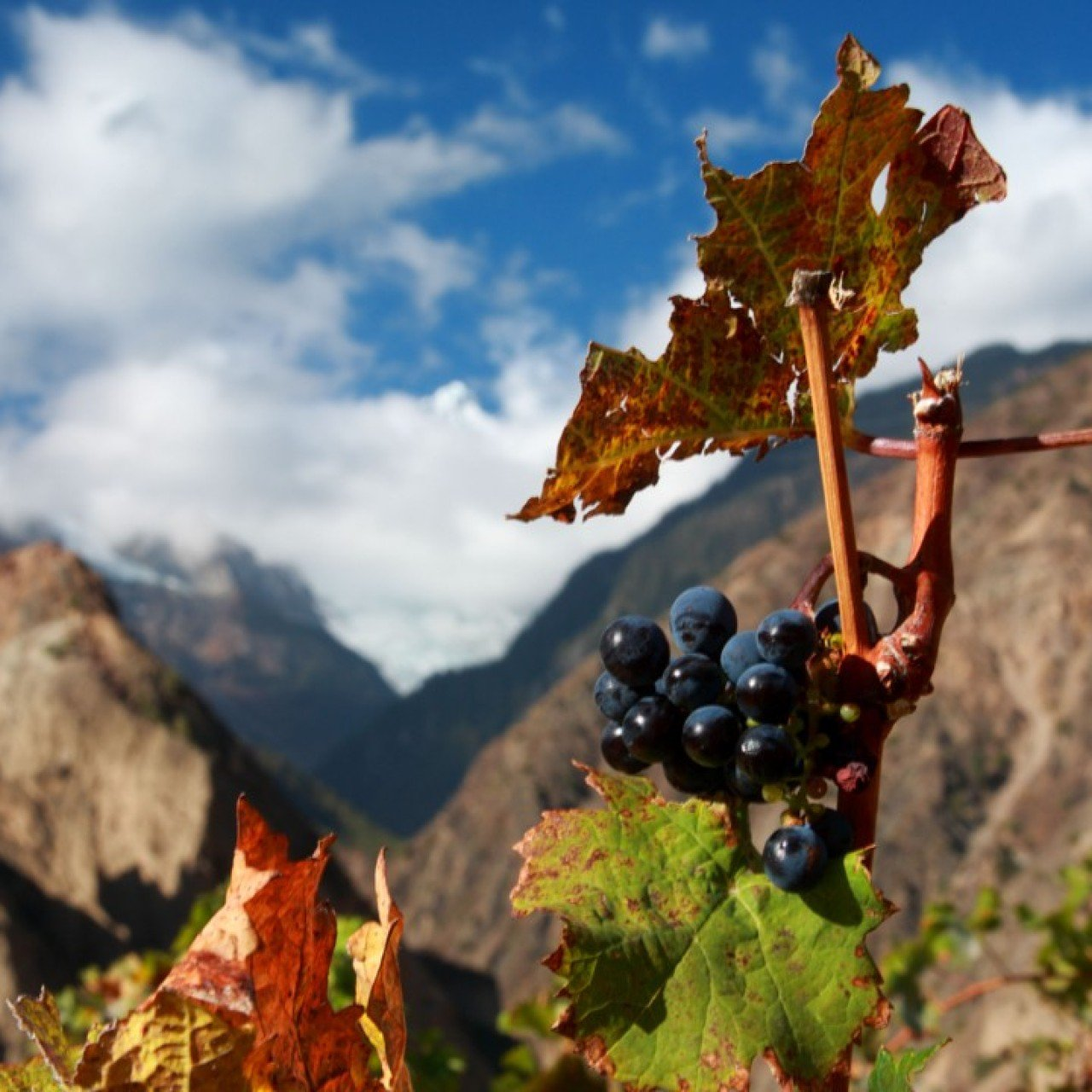 China's domestic wine market benefits from foreign know-how