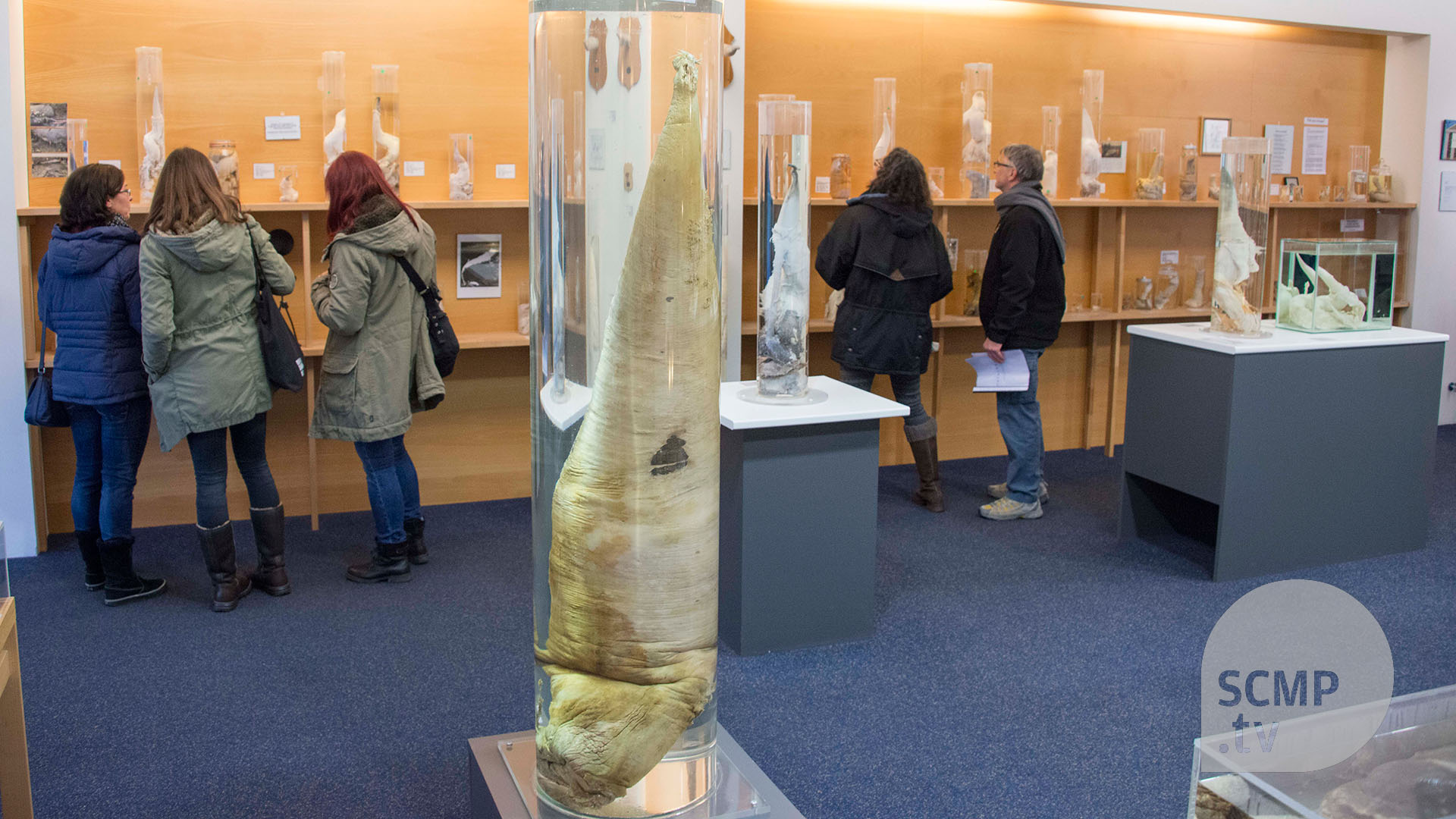 Iceland breaks taboo with world's largest penis museum | South China  Morning Post
